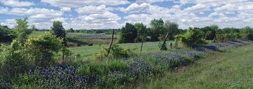 FENCE AND BLUEBONNETS