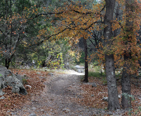 PATHWAY AT LOST MAPLES