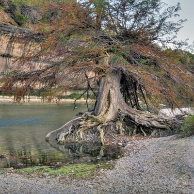 GUADALUPE TREE AND STONES
