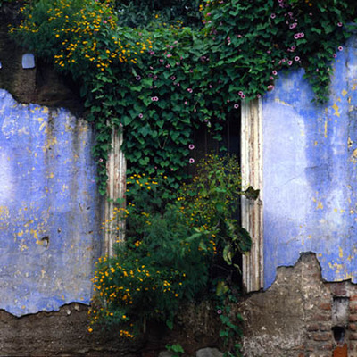The Blue Wall with Monring Glories and Buttercups, Guatemala