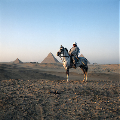 Nabi of Abdul Aziz Stables at Pyramids, Egypt