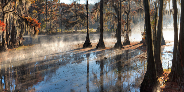 CADDO FOG, EARLY NOVEMBER